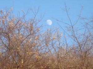luna DSC04201